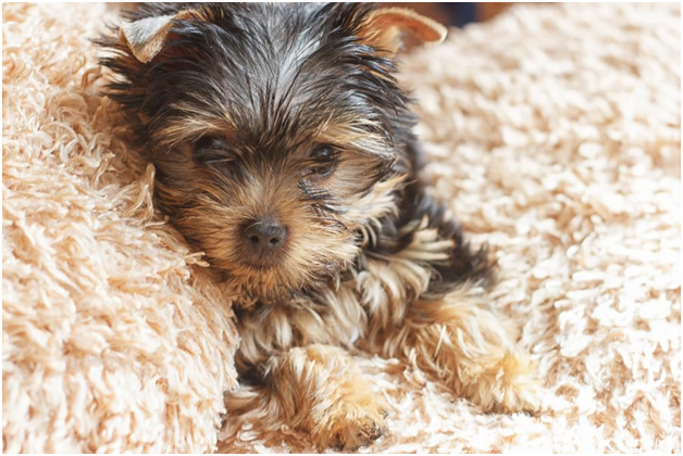 Why You Should Address Pet Stain on Your Carpet Immediately