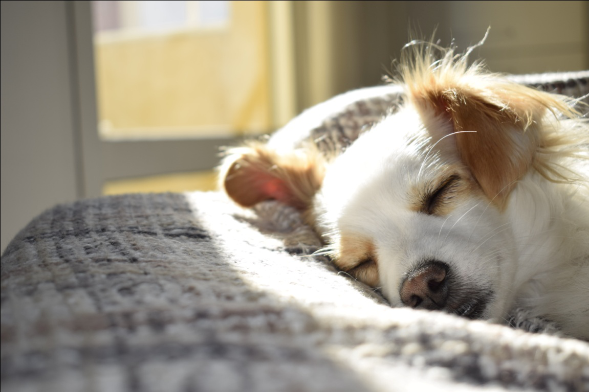 Ways to Get Rid Of Dog Smell and Hair From Your Home