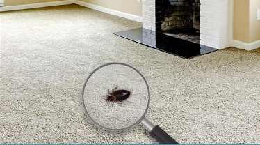 Creeping In Your Carpet